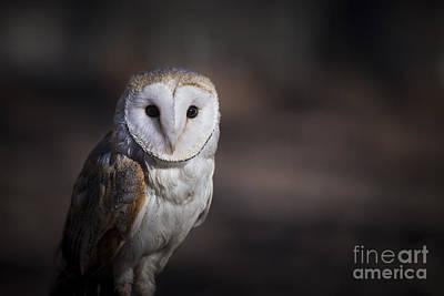 Photograph - Barn Owl by Andrea Silies