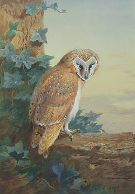 Barn Owl Art Print by Archibald Thorburn