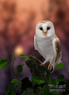 Photograph - Barn Owl At Sunset by Warren Photographic