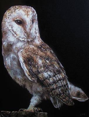 Painting - Barn Owl by Cherise Foster