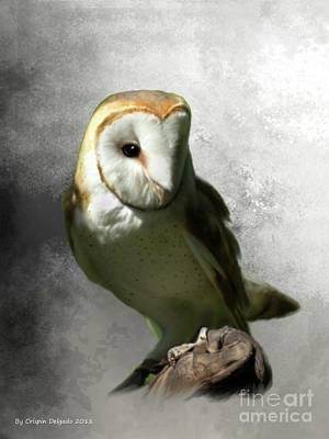 Barn Owl Art Print by Crispin  Delgado