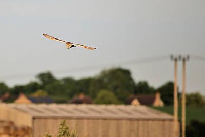 Photograph - Barn Owl by David Bradley