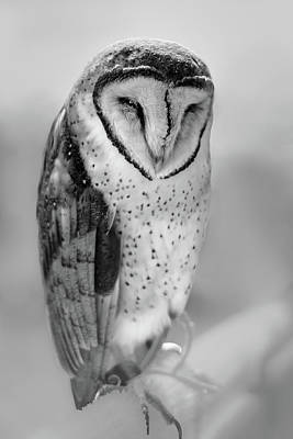 Photograph - Barn Owl II by Robert Mitchell