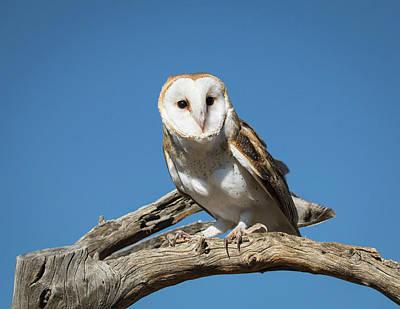 Photograph - Barn Owl-img_380917 by Rosemary Woods-Desert Rose Images