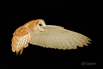 Photograph - Barn Owl In Flight by CR Courson