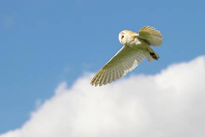 Birds Of Prey Photograph - Barn Owl In Flight by SydsPics Photography