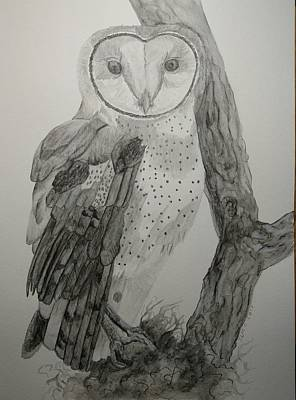 Drawing - Barn Owl by Joan Mansson