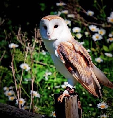 Barn Owl Art Print by Karen Arnold