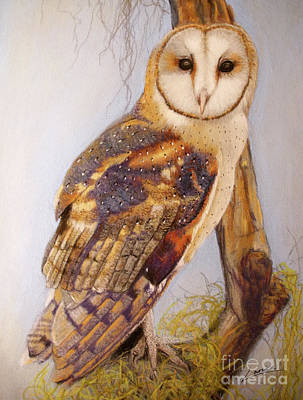 Pastel - Barn Owl by Lance Sheridan-Peel