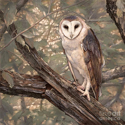 Wall Art - Drawing - Barn Owl by Laurie Musser