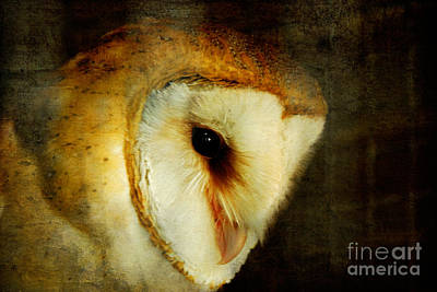 - Barn Owl by Lois Bryan