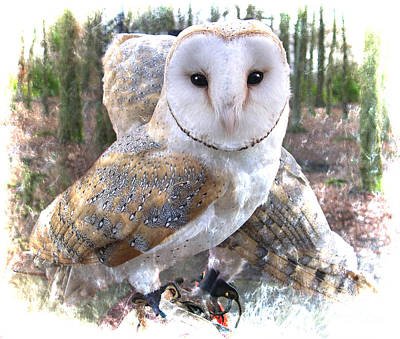 Photograph - Barn Owl Magic by Brenda Kean