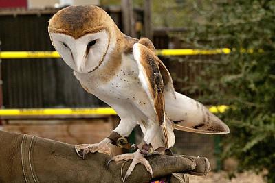 Photograph - Barn Owl by Michael Gordon
