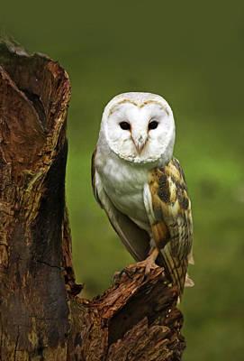 Barns Digital Art - Barn Owl On Bark by Georgiana Romanovna