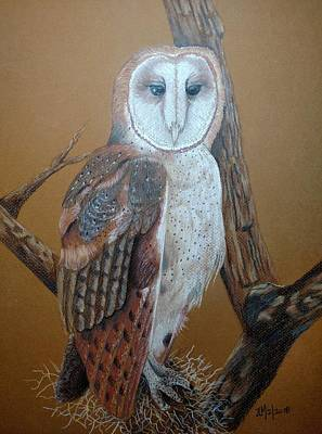 Pastel - Barn Owl On Tree by Joan Mansson