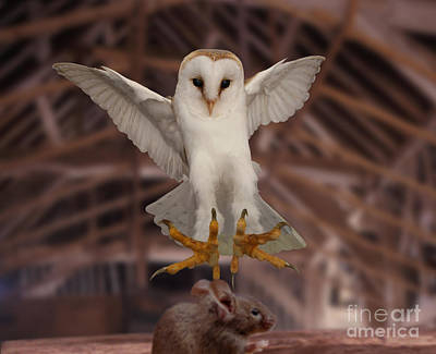 Photograph - Barn Owl Pouncing Mouse by Warren Photographic
