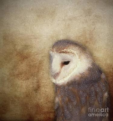 Textured Photograph - Barn Owl. by Robert Brown