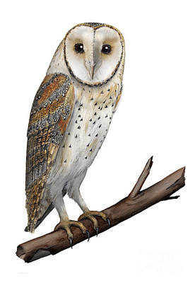 Art Print featuring the painting Barn Owl Screech Owl Tyto Alba - Effraie Des Clochers- Lechuza Comun- Tornuggla - Nationalpark Eifel by Urft Valley Art