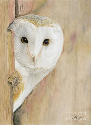 Painting - Barn Owl by Sheryl Elen