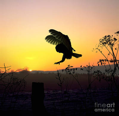 Photograph - Barn Owl Silhouette At Sunset by Warren Photographic