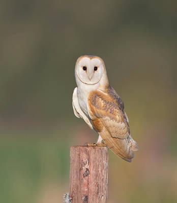 Photograph - Barn Owl Stare by Peter Walkden