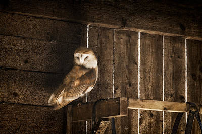 Photograph - Barn Owl by Stewart Scott