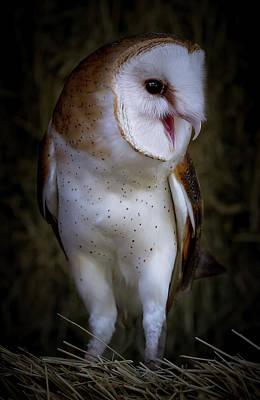 Photograph - Barn Owl Strut by Athena Mckinzie
