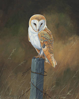 Barn Owl Study Original
