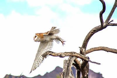 Photograph - Barn Owl by Tam Ryan