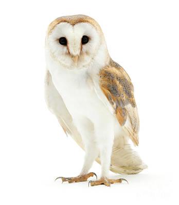 Photograph - Barn Owl by Warren Photographic