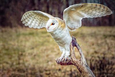 Photograph - Barn Owl Wings by LeeAnn McLaneGoetz McLaneGoetzStudioLLCcom