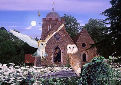 Photograph - Barn Owls At Albury Church by Warren Photographic
