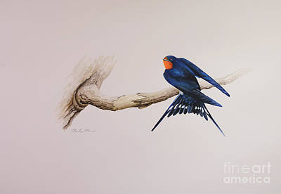 Painting - Barn Swallow by Charles Owens