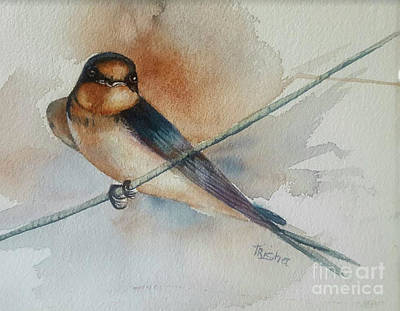 Barn Swallow Original by Patricia Pushaw