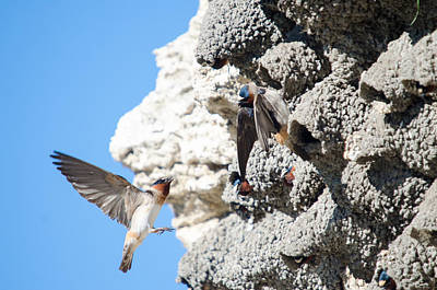 Photograph - Barn Swallows Home by Crystal Wightman