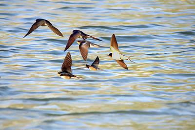 Barn Swallows In Flight - Digitalart Art Print by Roy Williams