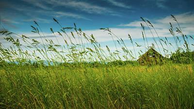 Photograph - Barn Through The Tall Grasses by Don Schwartz