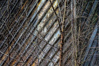 Photograph - Barn Trees Cary Illinois Dsc6517 by Raymond Kunst