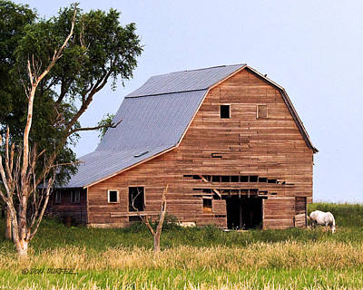 Photograph - Barn With White Horse by Don Durfee