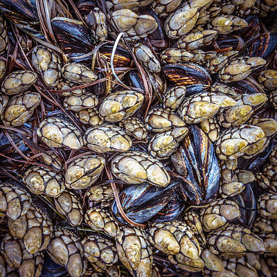 Photograph - Barnacles And Mussels by Alexander Kunz