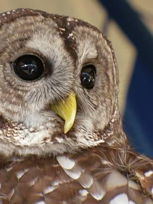 Barney The Owl Art Print