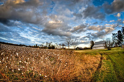 Photograph - Barns And Cotton by Andrew Crispi