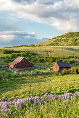 Photograph - Barns And Lupine by Denise Bush