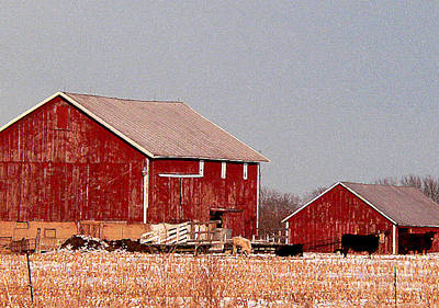 Barns In Winter Art Print by David Bearden