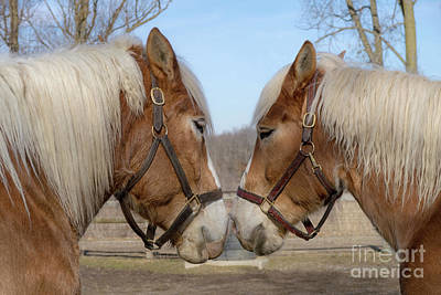 Photograph - Barnyard Buddies by Ann Horn