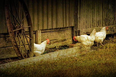 Photograph - Barnyard Chickens Feeding by Randall Nyhof