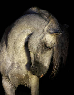 Photograph - Baroque Horse Portrait by Ekaterina Druz