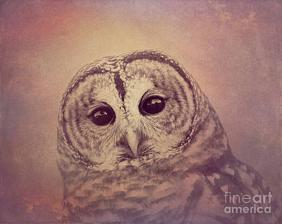 Photograph - Barred Owl 2 by Chris Scroggins