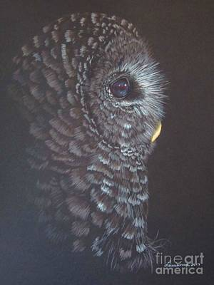 Drawing - Barred Owl 2 by Laurianna Taylor