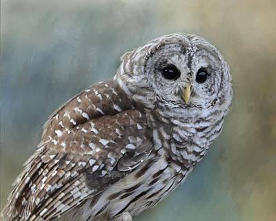 Photograph - Barred Owl by Ann Bridges